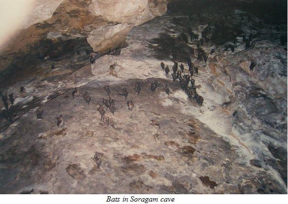 bats in soragam cave